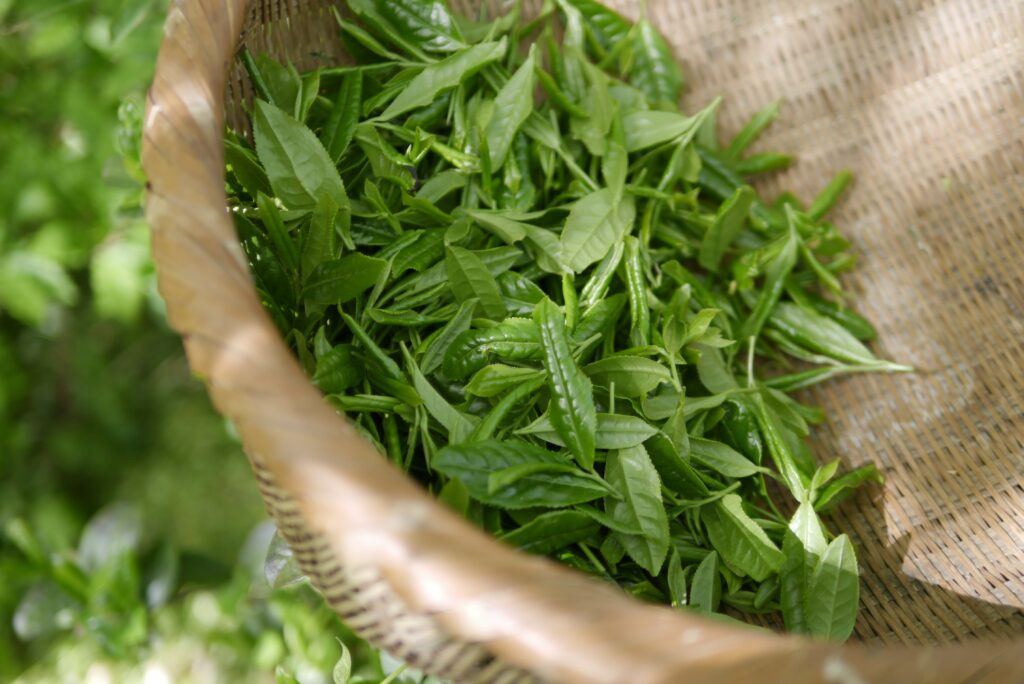 green-tea-5301025.jpg